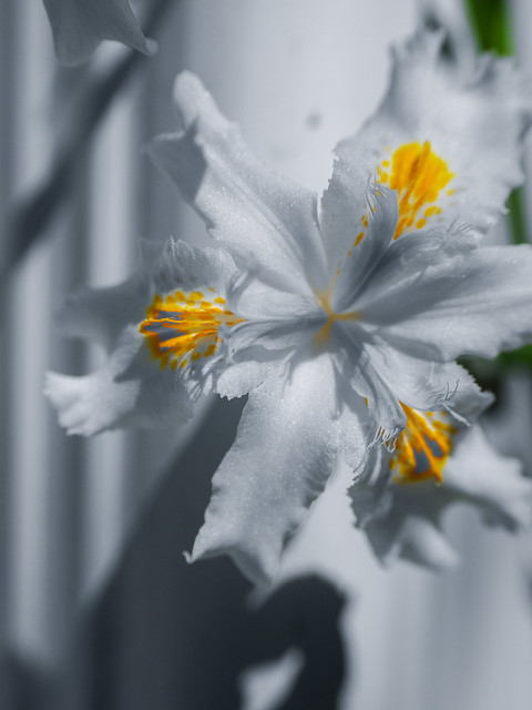 Selective color - yellow.