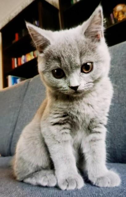 Random kitten.