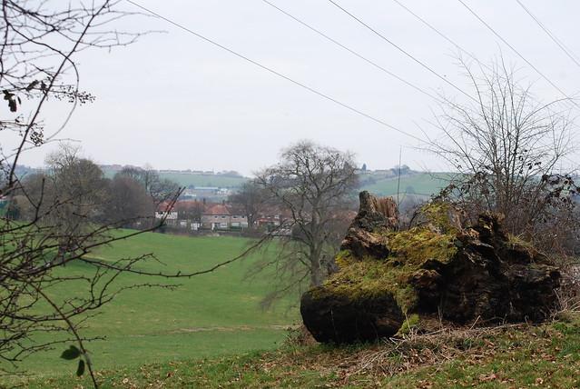 Fallen tree.....