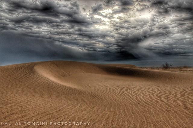Desert details after the rain!