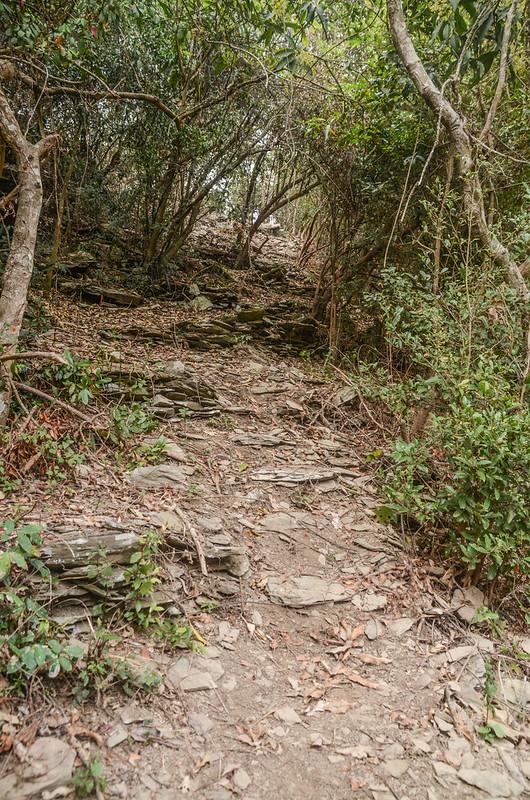 德德山西北峰登山小徑 (2)