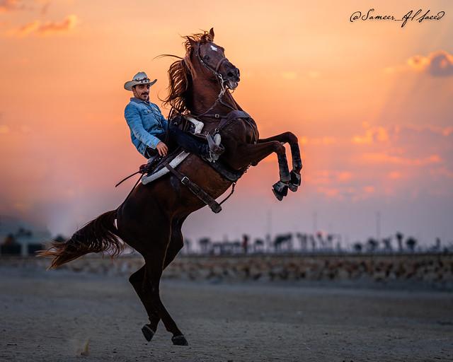 Bahraini horse rider rearing at sunset