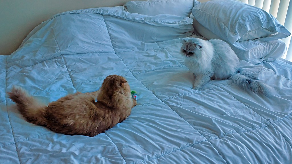 Pumpkin and Pudding on the bed