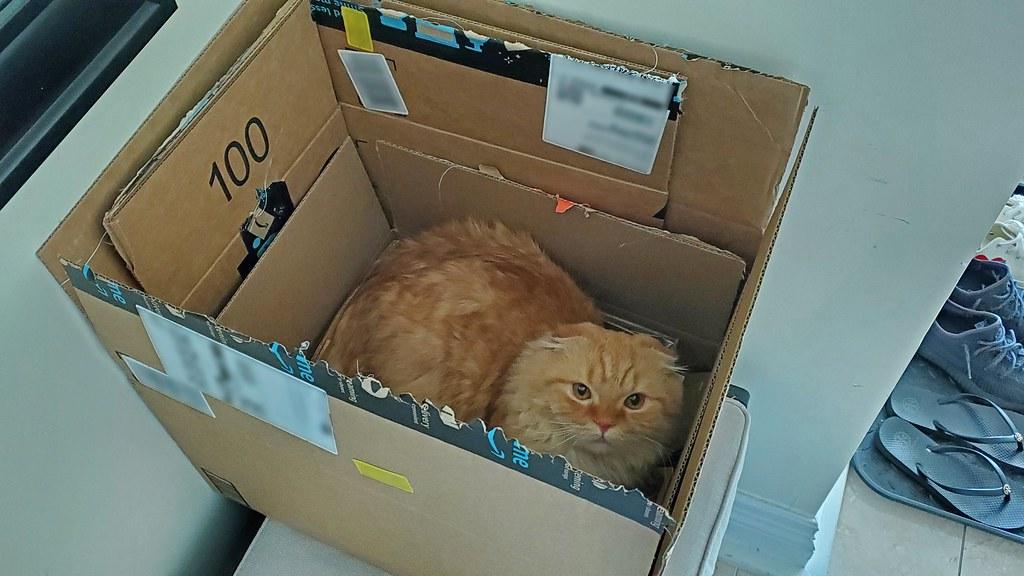 Pumpkin in a box