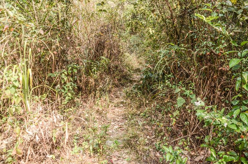 東多納山腰繞山徑 (1)