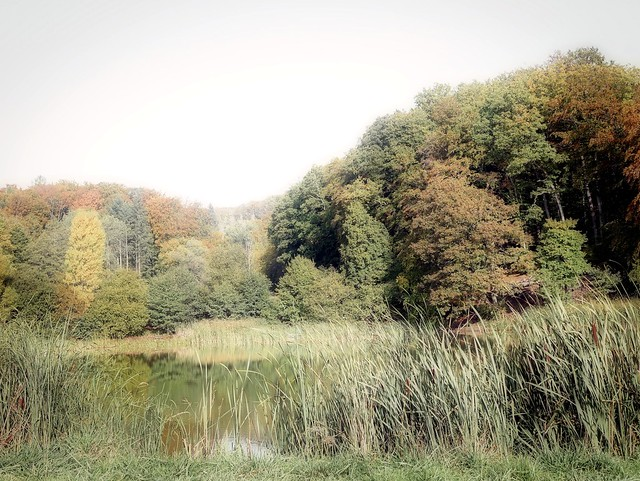 Herbstwald im Morgendunst