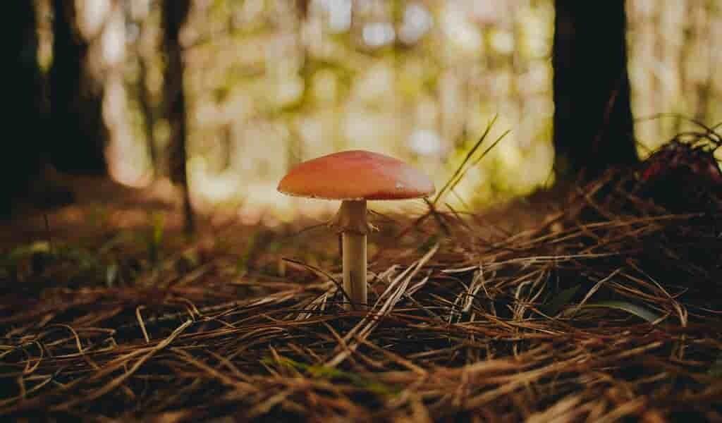 le-bois-pourri-par-des-champignons-génère-électricité