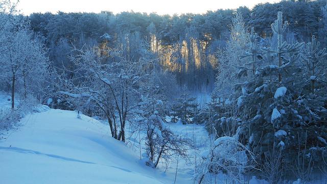 Winter Impressions 56