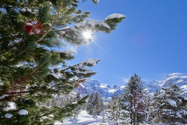 Winter Deluxe