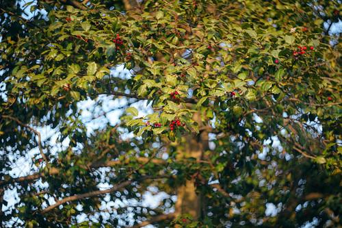 lenstagger evening rockville maryland md twinbrook neighborhood suburbs outside outdoors light march sunny manual spring lens zenit russian vintage soviet 442 m42 58mm bokeh swirly swirl sunset sony a7riii ilce7rm3 emount fullframe mirrorless camera photography
