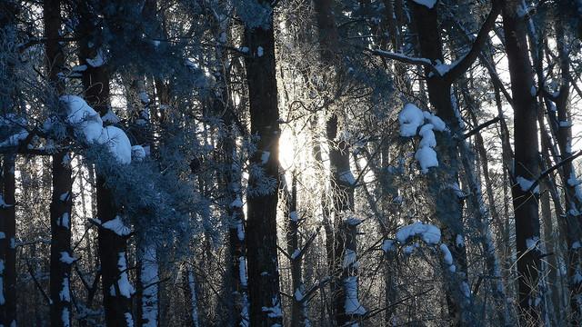 Winter Impressions 57