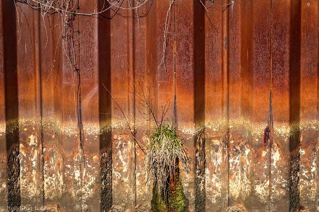 Rusty - Photocredit Neil King -1