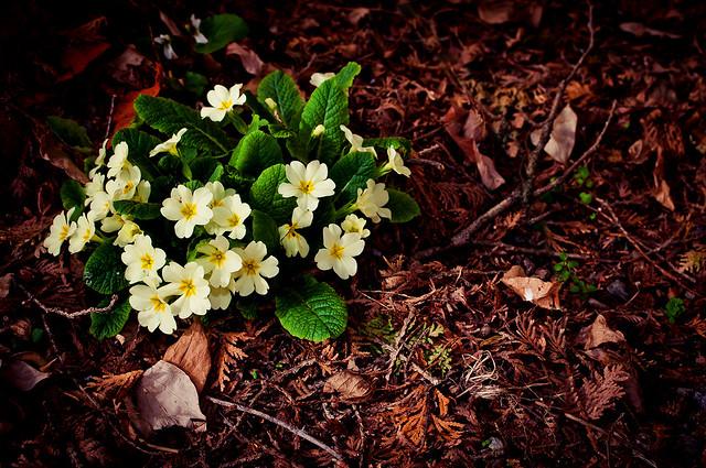 Primavera | 2012