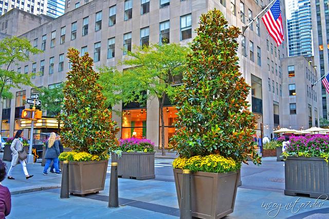 Beautiful Rockefeller Plaza Arrangements Rockefeller Center Midtown Manhattan New York City NY P00828 DSC_9605