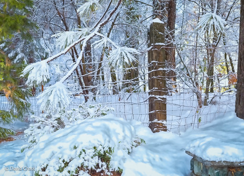winterscape california landscape nevadacity cementhillhouse snowyday sierranevadafoothills lightroom6 winter topazstudio canonef24105mmf4lisusm canon5dmarkiii nevadacounty snow
