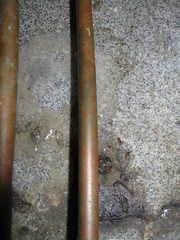 hoto of a wet, dirty floor with six small reddish-orange cigar-shaped fly pupae next to and under a copper pipe.