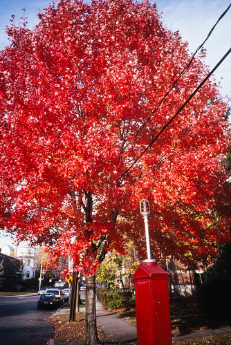 Autumnal Tree and a Fire Call Box