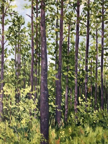 Plantation Pines 18