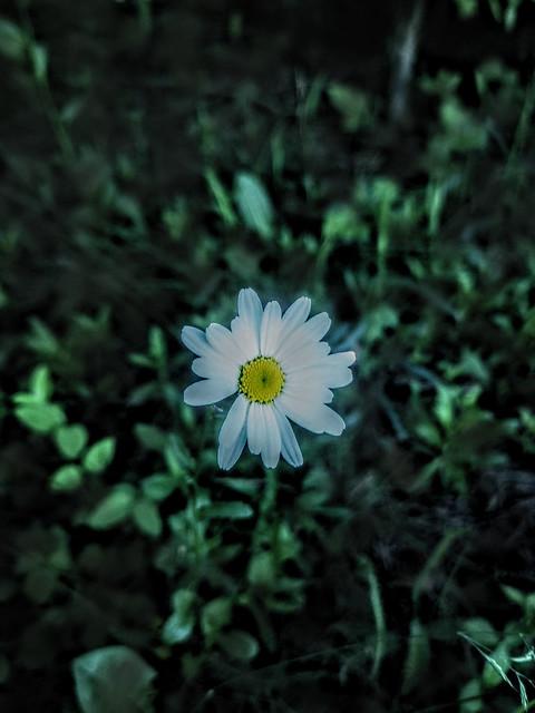 WILDFLOWER BY YANNIS LOBAINA