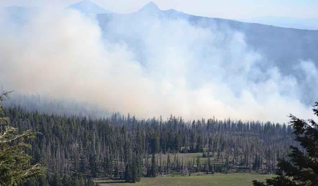 une-application-simule-les-feux-de-forêts-afin-de-les-contourner