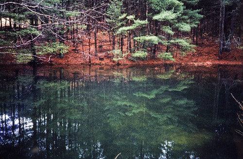 Pond Reflecting New England Woods (1)