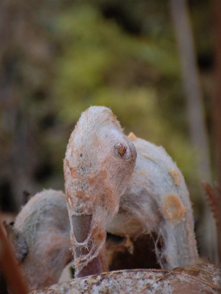 En forme d'éléphant