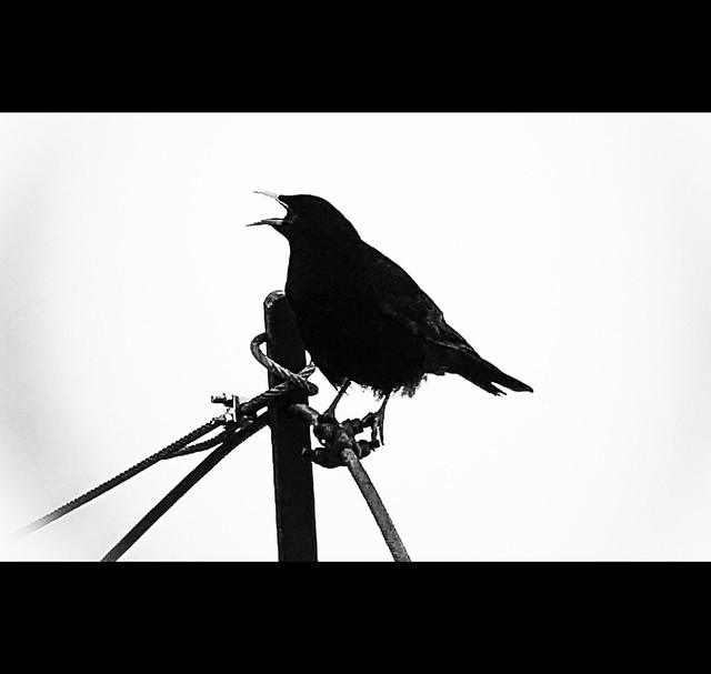 -= the crow =-