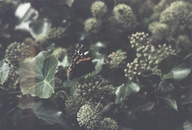 chillin' butterfly
