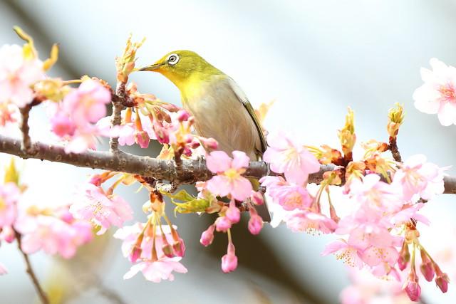 Wild bird and spring flowers