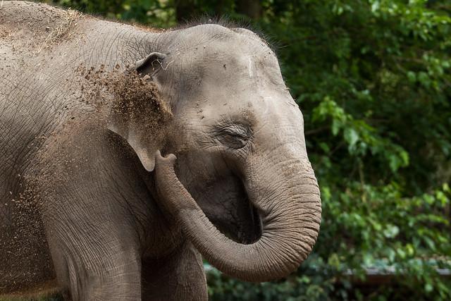 Happy elephant!