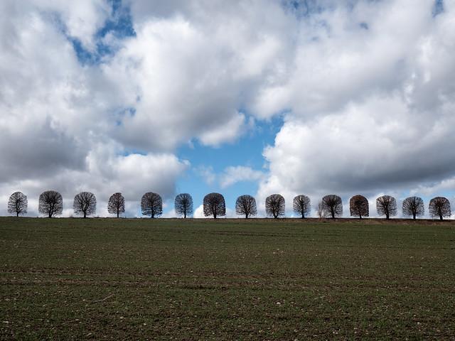 Tree row / Baumreihe