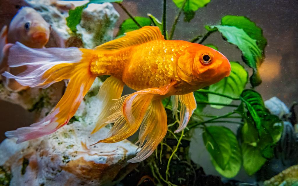 Dans l'aquarium... 51028516703_66776d4f9c_b