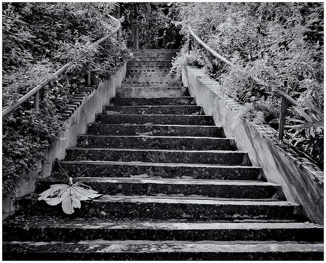 Botanical Garden, Puerto Rico (1996)