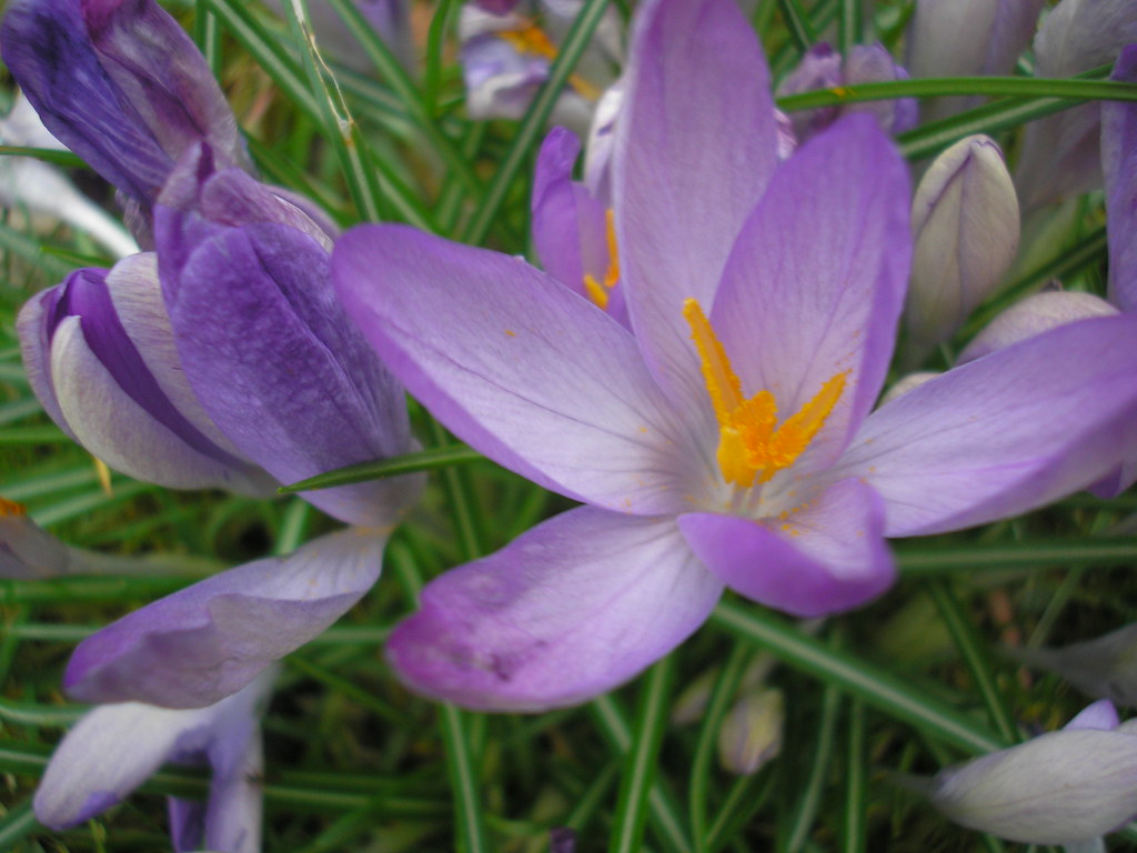 Spring Returns 104