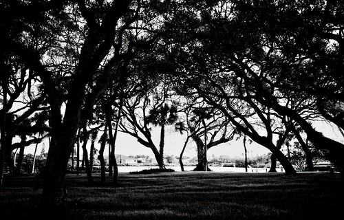 backlit silhouette shadow beauty nature composition minimalism minimal abstract canopy leicaq2 riomar verobeach liveoak ipadedit snapseed seeingcreatively art landscape shape lines trees lighting blackandwhite