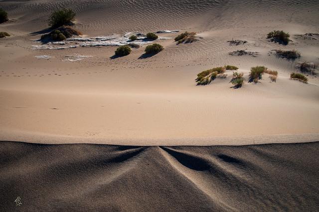 Dune Edge