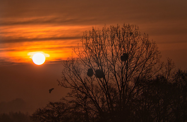 Sonnenaufgang - Sunrise (on Explore ⭐ March 12, 2021)
