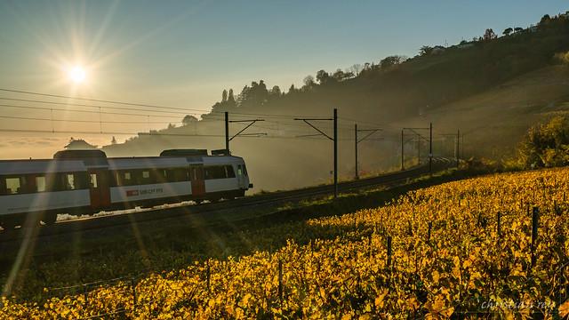 Le train dans le vignoble du Lavaux (Switzerland)