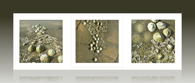 march of the limpets ....