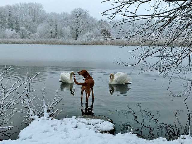 Germany, Begegnung am winterlichen See, 60083/13465