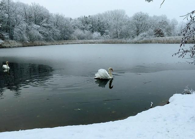 Germany, Begegnung am winterlichen See, 60082/13464