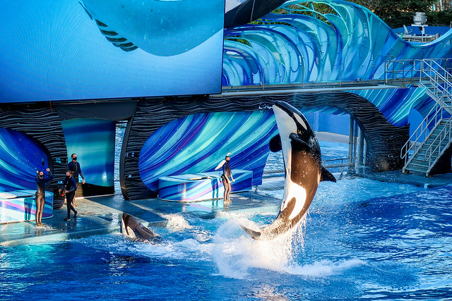 3.8.2021_PS_G7X_SeaWorld.236