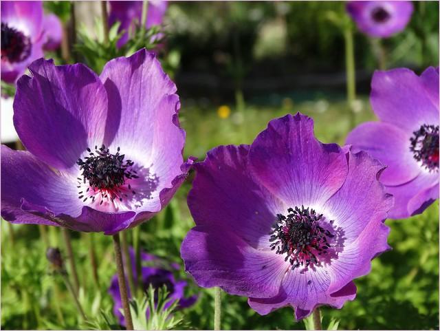I fiori del vento..