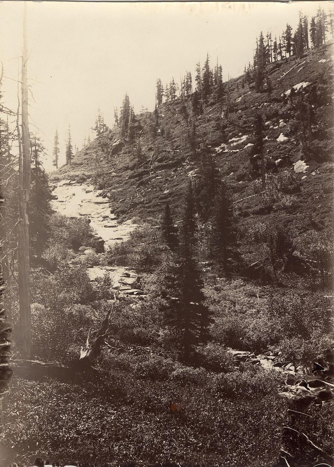38. Склон горы с отдельно стоящими деревьями