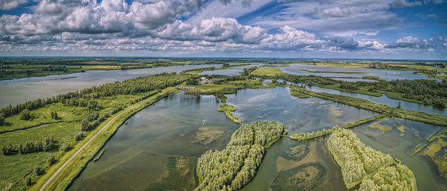 Aerial Biesbosch