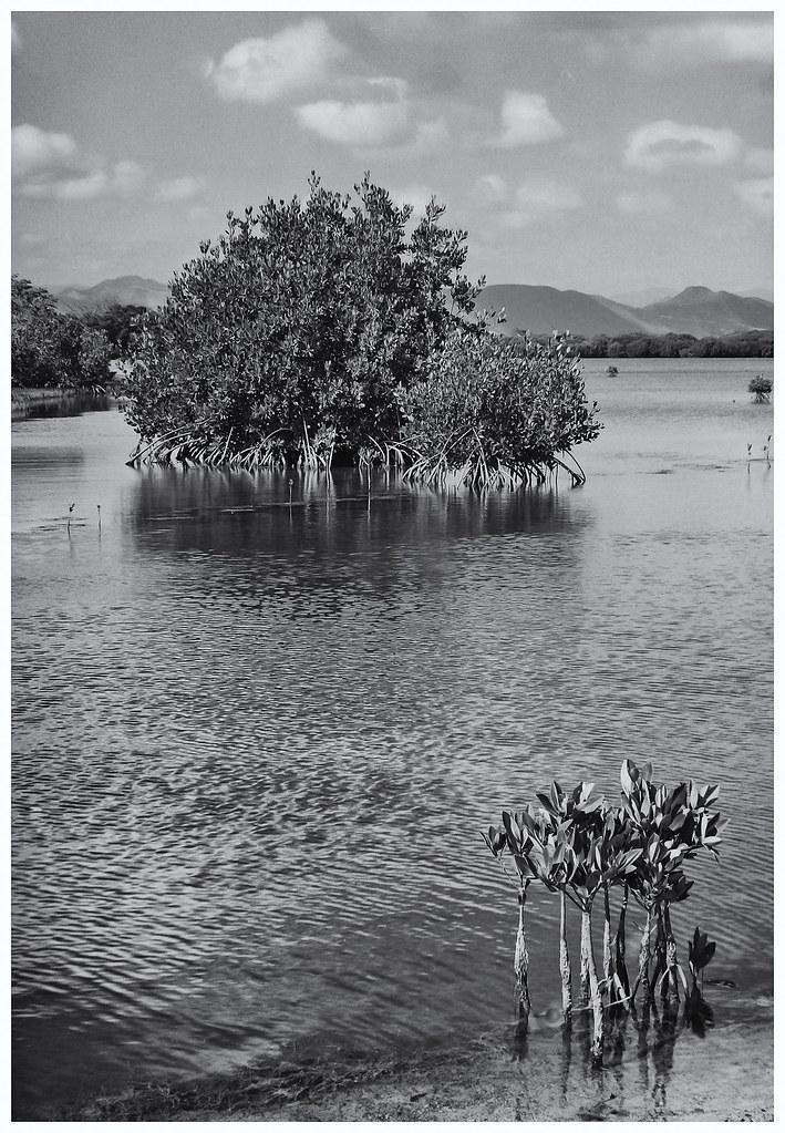 Las Mareas, Salinas, Puerto Rico (1991)