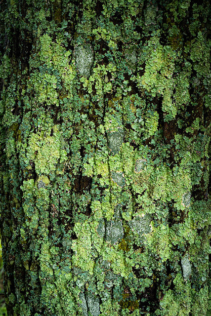 Lichen and moss on a tree