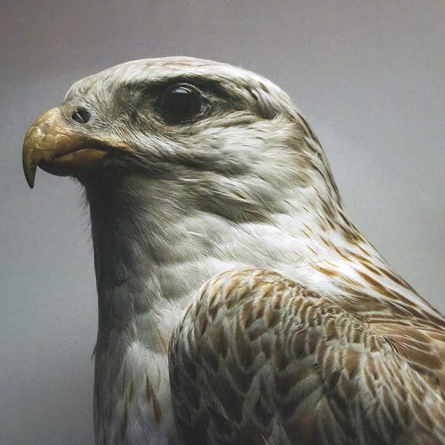 Eagle LSSq