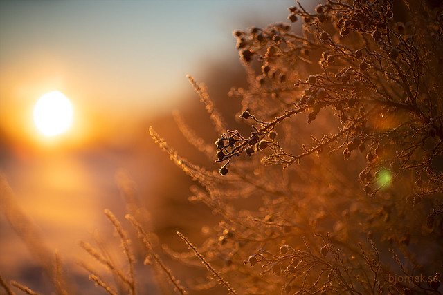 A Cold Morning
