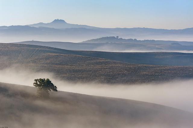*fields in the morning mist*
